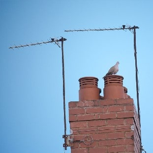 a photo of a chimney with a pigeon