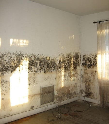 mould on a wall can be cured by never paint again