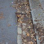 KERB APPEAL Fallen leaves can block street drains