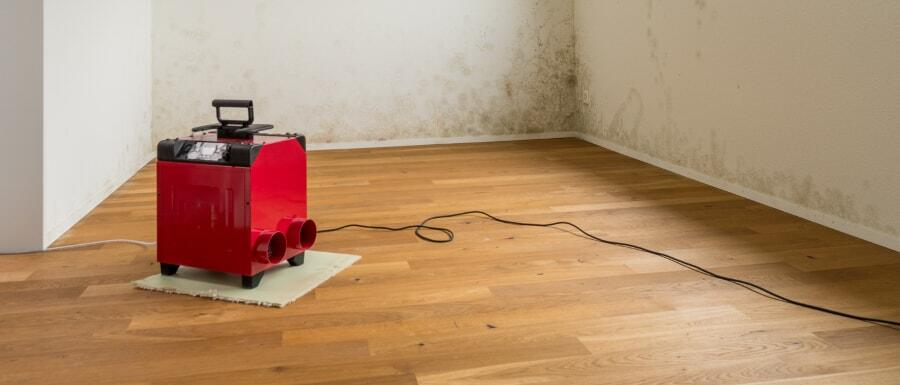 dehumidifier in a room with mold